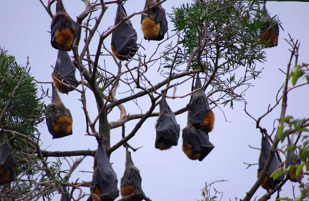 Why Bats Only Fly During Night
