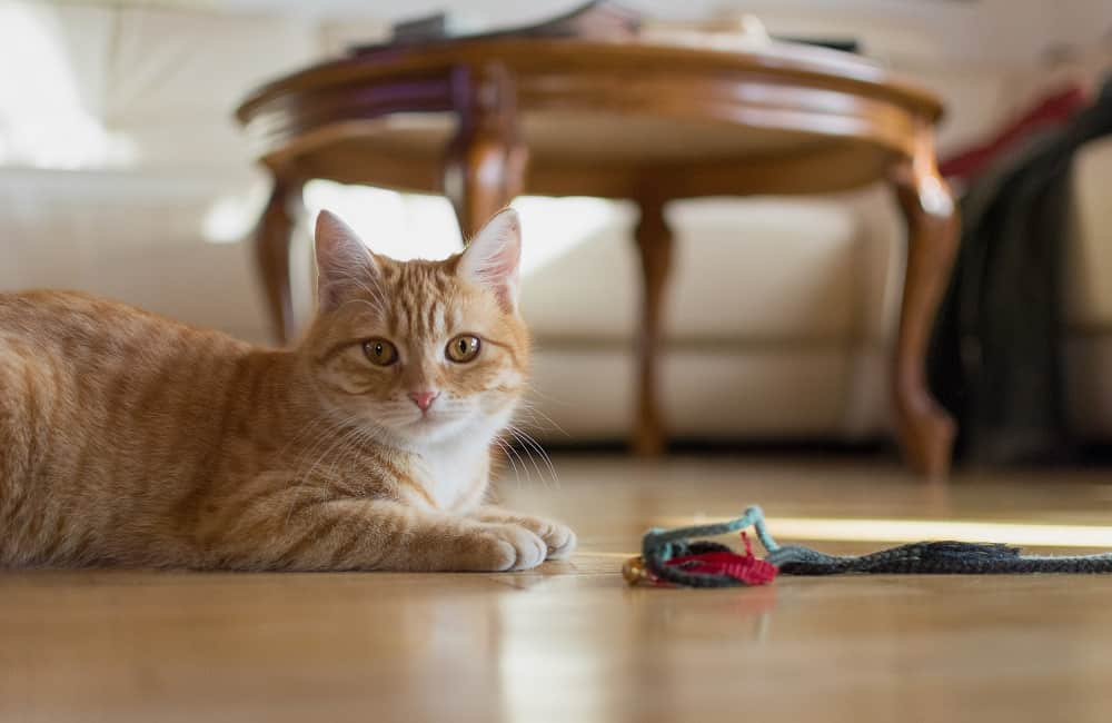 Why Do Cats Like To Be Alone?
