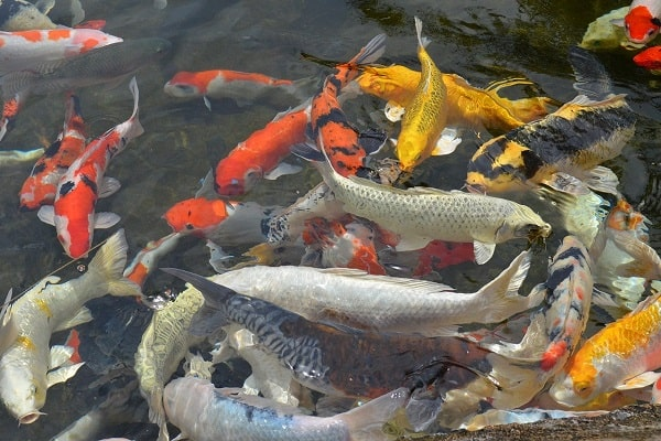 what types of fishes can be found in a river