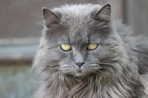 why do cats always look mad