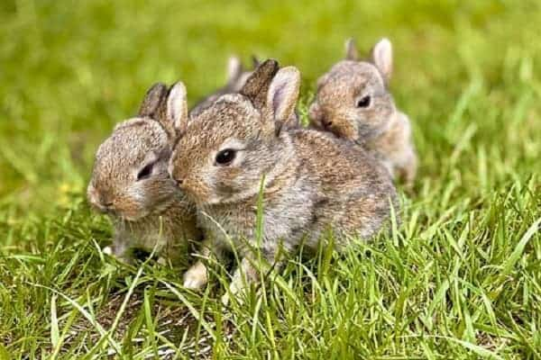 Animals That Hop To Move