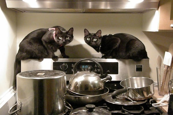 Why Don't Animals Cook Their Food