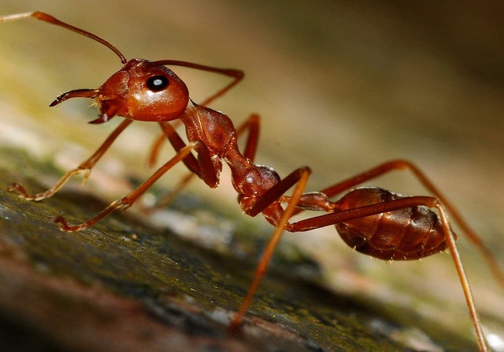 ants can recognize themselves in mirror