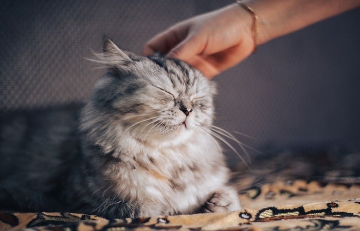 How To Make Your Cat Less Clingy
