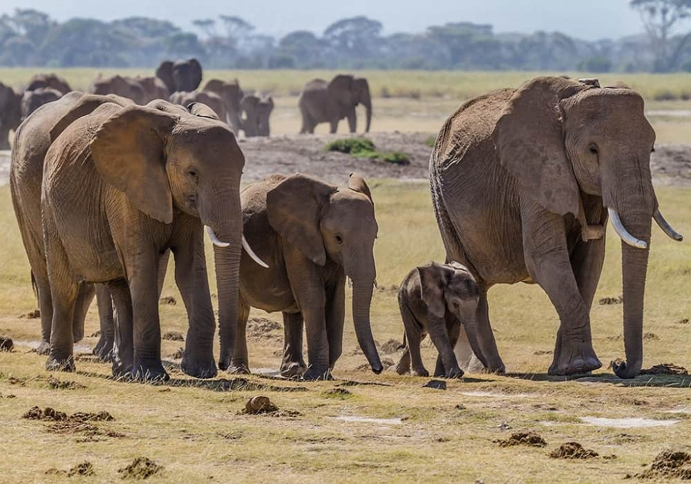 elephants can recognize themselves in the mirror