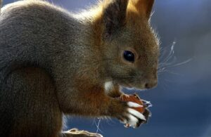 How Do Squirrels Drink Water