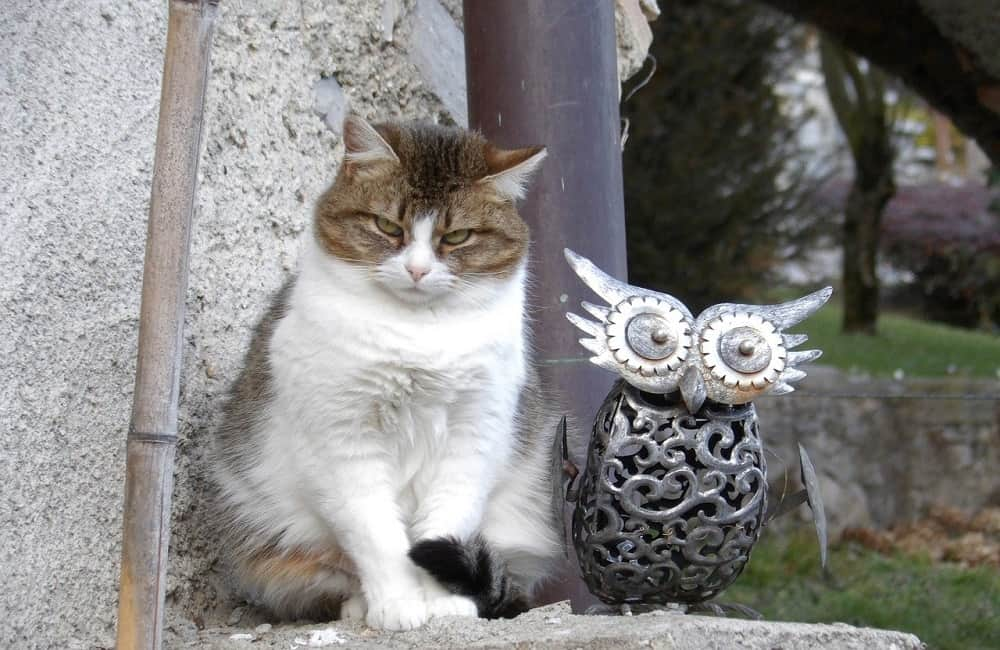 Why Do Owls Look Like Cats